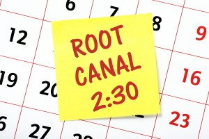 What To Expect From Your Root Canal