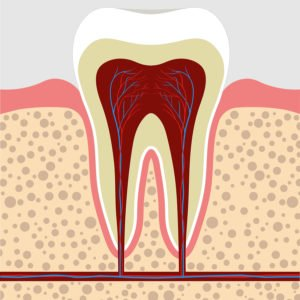 Could A New Drug Cause Dentin To Grow?